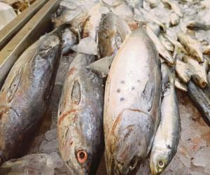 Fish importers free to source from any country
