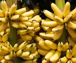 Plans to 'export chicken egg' bananas