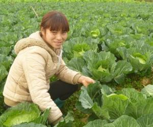 Counter season vegetables help improve women's lives in north-western Vietnam