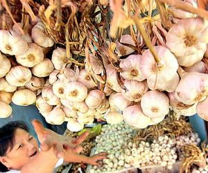 DA to blacklist 43 traders for failing to import enough garlic