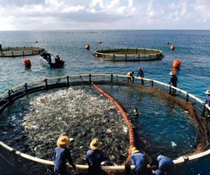 Indonesia starts offshore aquaculture inspired by Norway