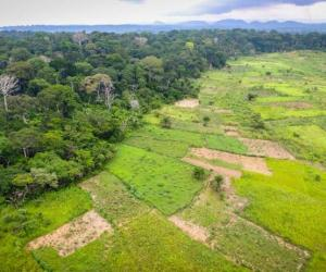 Can Forests Act as Buffers Against Food Insecurity?
