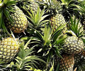 Government moves to revive piña fiber industry
