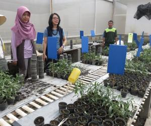 Indonesian SFRT grantees conduct studies in aid of rural and agricultural communities
