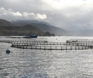 Sustainable fish farming is possible for the majority of coastal countries