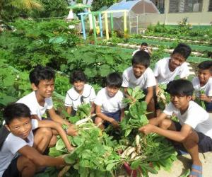 School gardens for learning, improved nutrition, and savings