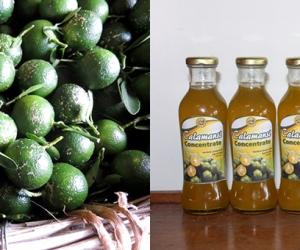 SEARCA and partners to help upgrade calamansi value chain in Mindoro through support of DA-BAR