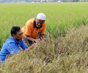M'sia ranks among best in terms of global food security: Agriculture Minister