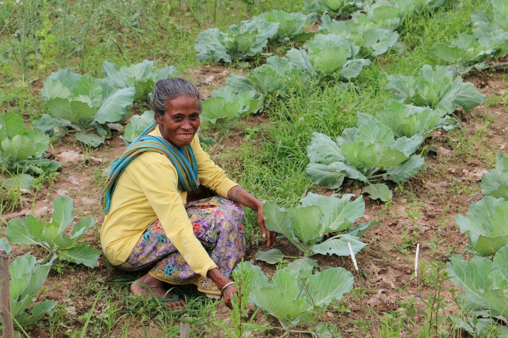Elsa Da Arujo tends her crop at Hkhmor, Timor Leste (All photos by Wendy Levy/IRIN)
