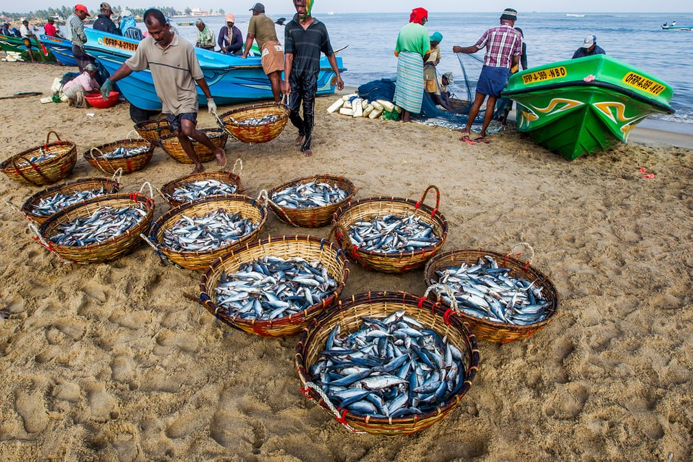 Small catches are collected on the beach in Sri Lanka. Artisanal fishing is vital to food security in developing countries