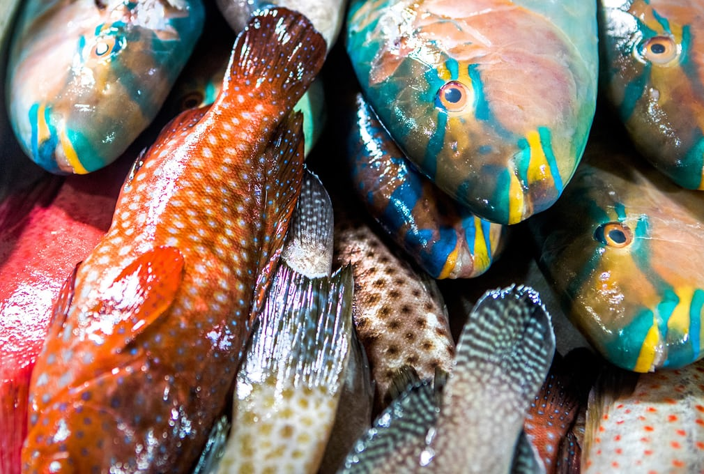 Colourful reef fish for sale in Jimbaran fish market in Bali, Indonesia. Catches from small-scale fisheries are often diverse, but very little is wasted. In contrast, large-scale fishing produces an annual estimated discard of 10m tonnes.