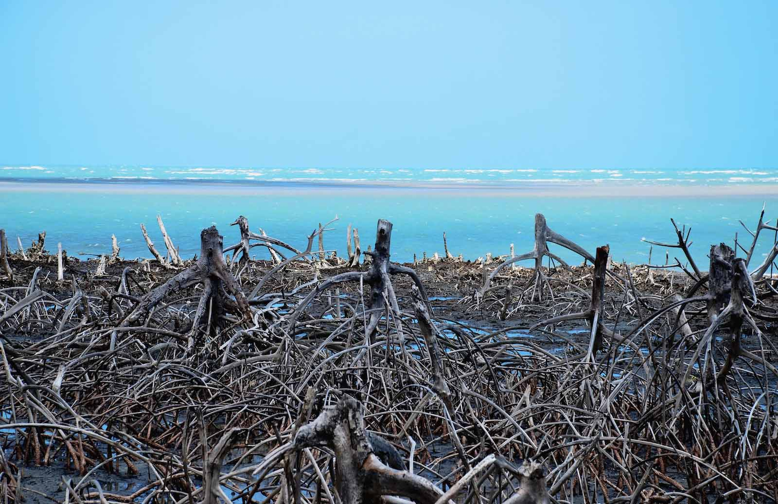 Stock image of a degraded coastal mangrove forest. Image: iStock/Getty Images