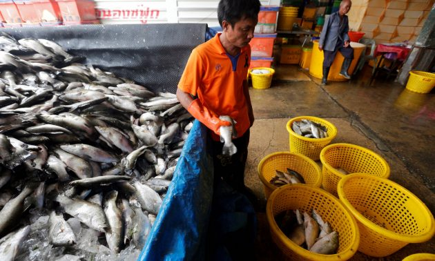 A Myanmar migrant worker sorts fish at a wholesale market for fish and other seafood in Mahachai, Samut Sakhon province, Thailand, July 4, 2017. Photo: Reuters/Chaiwat Subprasom