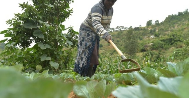 Small-scale farmers produce 80 percent of the food supply in sub-Saharan Africa and Asia. AFP file photo