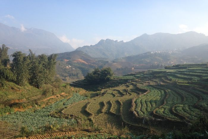 Terraced agriculture near Sa Pa in north western Vietnam. (ABC Southern QLD: Cassandra Hough)