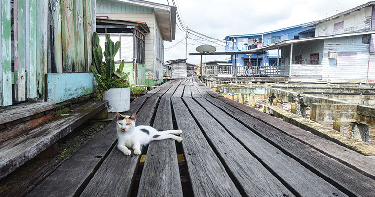 A local cat lazes on the wooden walkways
