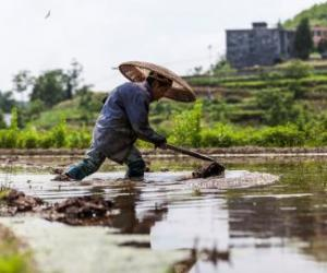 Sowing the seeds for better food policy in Asia