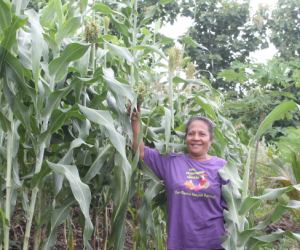 Planting sorghum proves to be a blessing on Flores Island