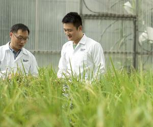 Dr Yin Zhongchao named Singapore's Outstanding Rice Scientist for 2017