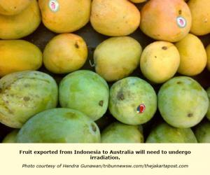 Indonesia: Mangoes, dragon fruit to enter Australian market