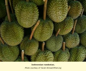 Indonesia: Nutritionist debunks biggest myth about durian