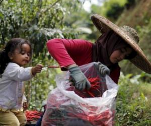 Indonesia is hungry for a better food policy