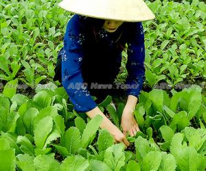 Vietnam agriculture: government will & education needed