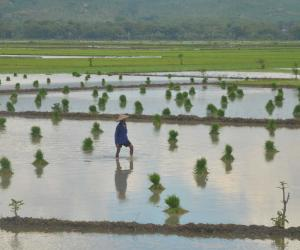 AIIB Approves $250M Loan To Modernize Irrigation in Indonesia