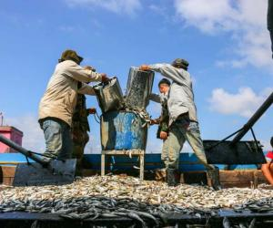 Time to upgrade post-harvest fishery value chains in Kingdom