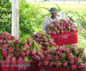 Meeting seeks to develop Vietnam's agriculture amid COVID-19