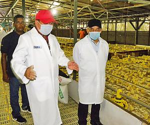 Brunei plans to export chicken to Japan, Korea
