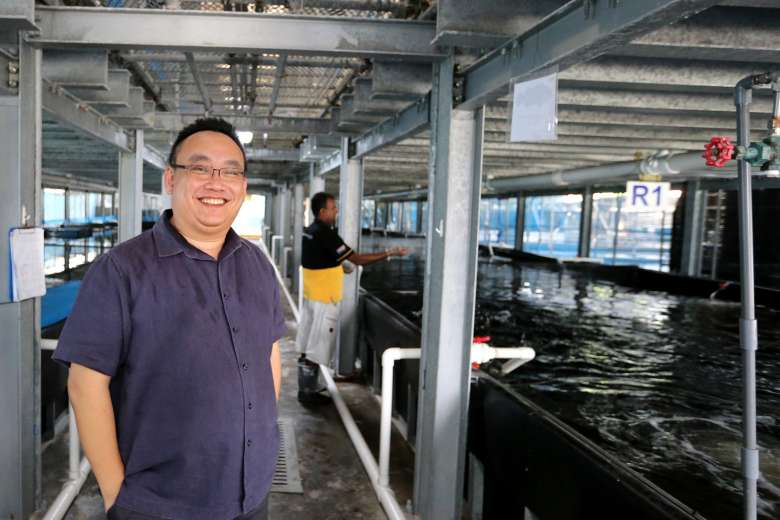 Mr Ng, group CEO of Apollo Aquaculture, at his company's farm in Lim Chu Kang, one of 62 that will see their leases expire in 2019.ST PHOTO: JONATHAN CHOO