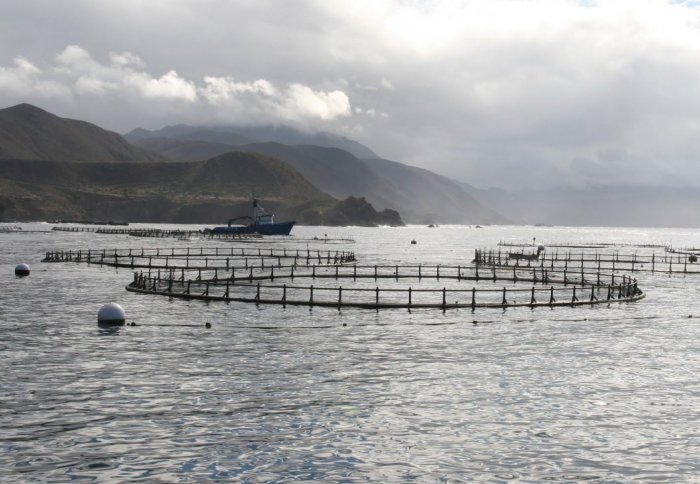 Fish farm. Credit: NOAA