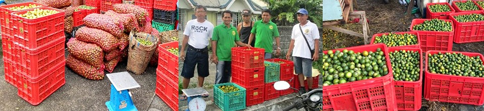 value adding revives town wasting calamansi industry 04