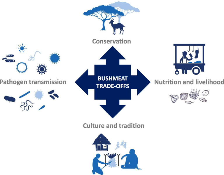 A schematic shows the various trade-offs involved in the bushmeat trade. Image courtesy of Pruvot et al., 2019 (CC BY 4.0).