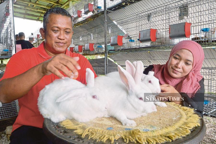 Fakhrurrazi Mohd Habib (left) with Norzaimila Zainudin with New Zealand White rabbits reared by the former in Klang. NSTP/Faiz Anuar