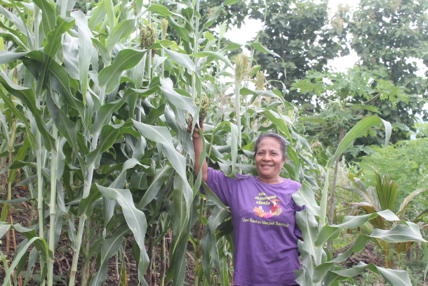 Yustina Jari is pictured at the 3-hectare sorghum farm she manages together with her husband, Yakobus Doni, in Kimakamak village of Larantuka Diocese in Indonesia's Flores Island. (Photo by Melkhior Koli Baran/ucanews.com)
