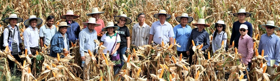 Cambodia NPSC members and SEARCA Team visit a maize farm in Battambang. Photo by Mr. Veng Phano, MAFF-GDA